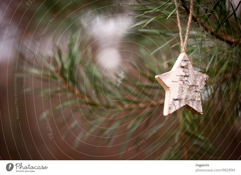 natural starlet Christmas & Advent Nature Plant Tree Twigs and branches Pine Fir branch Coniferous trees Forest Hang Natural Brown Gray Green Emotions Moody