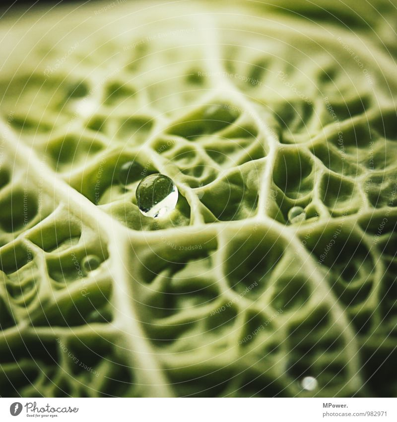 Savoy cabbage III Food Nutrition Organic produce Vegetarian diet Delicious Vegetable Healthy Eating Vessel Structures and shapes Green Vitamin-rich Vegan diet