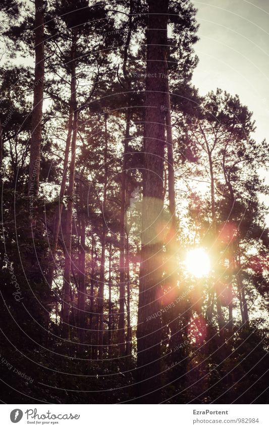 Sky Nature Plant Summer Sun Tree Landscape Black Forest Environment Autumn Natural Wood Line Illuminate Pine