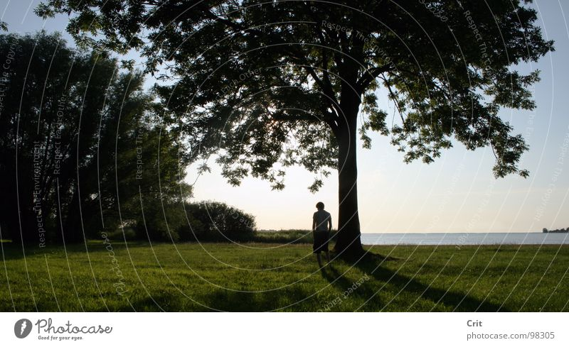 paradise II Relaxation Summer Grass Cowboy Peace standing sun breeze tree bush forest Americas earth world Human being Guy Stand chilling water horizon