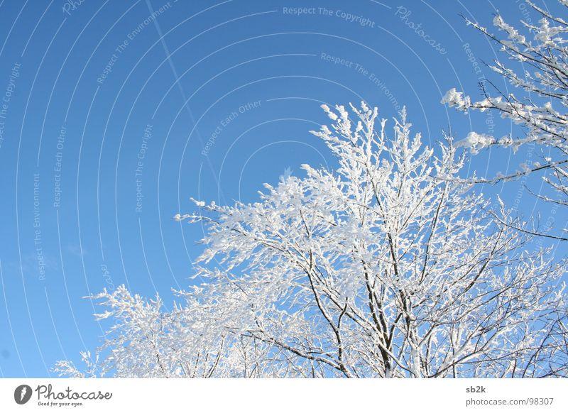 Beautiful White Tree Blue Joy Winter Clouds Dark Cold Snow Line Bright Horizon Frost Branch Friendliness