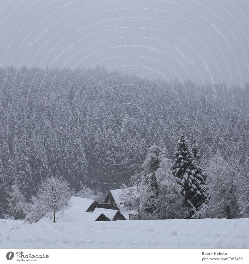 picture-book winter House (Residential Structure) Nature Landscape Winter Ice Frost Snow Snowfall Tree Forest Black Forest Village Manmade structures Breathe