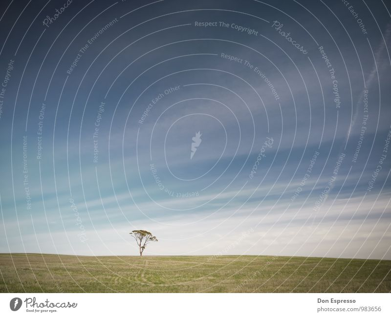 Zen II Calm Meditation Sky Tree Meadow Line Loneliness Exterior shot Deserted Copy Space top