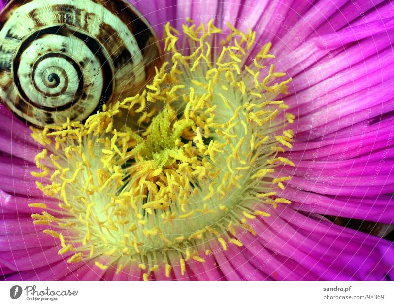 White Flower Yellow Blossom Spring Pink Sleep Happiness Violet Beautiful weather Snail Spiral Wake up Stamen Snail shell