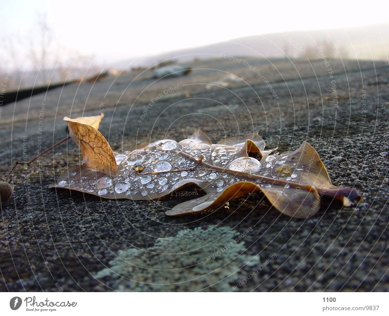 Nature Water Leaf Autumn Drops of water Shriveled Bond