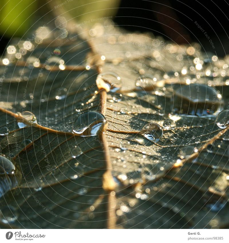Plant Green Water Emotions Line Rain Glittering Drops of water Wet Hind quarters Tears Furrow Wood grain Opposite Rear side Tropical fruits