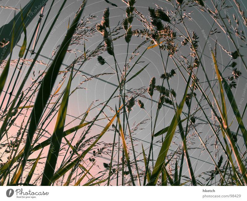 RAILWAY STRIKE Habitat Meadow Grass Blade of grass Stalk Worm's-eye view Concrete Overhead line Electricity Sunrise Spring Summer Physics Light Strike Going