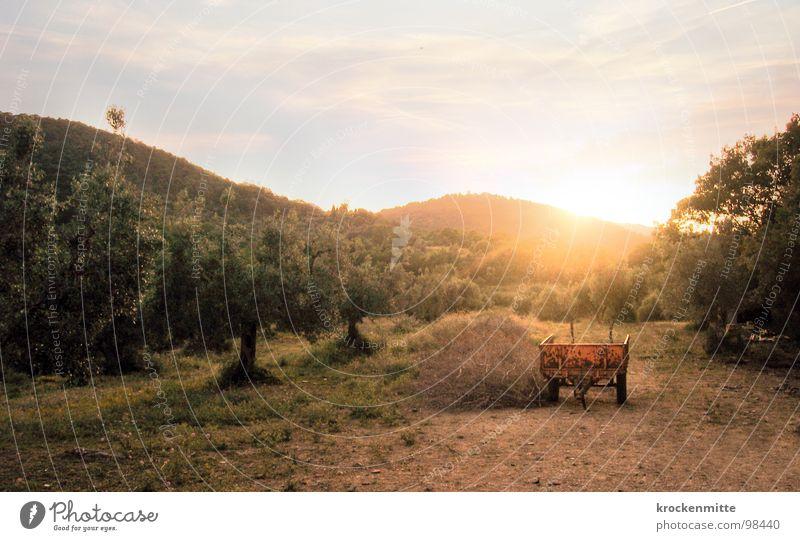 evening light Tuscany Italy Vacation & Travel Tree Sunset Sunlight Wheelbarrow Straw Physics Romance Farm Agriculture Nature Warmth