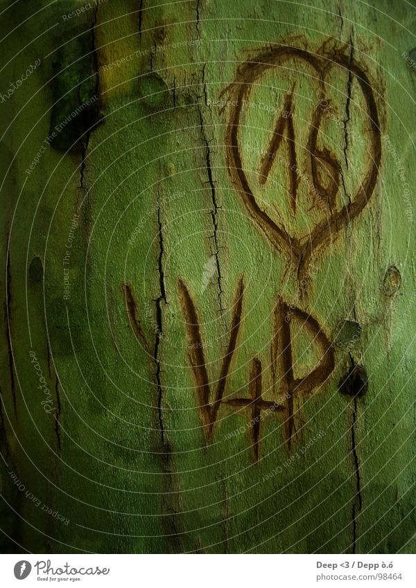 V+P = <3 Tree Green Brown Graven Tree bark Together Furrow Black Love Old Heart scratched