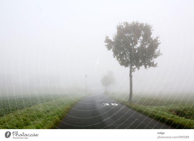 City Tree Landscape Winter Dark Environment Street Autumn Lanes & trails Air Fog Transport Traffic infrastructure Haze 30 Town