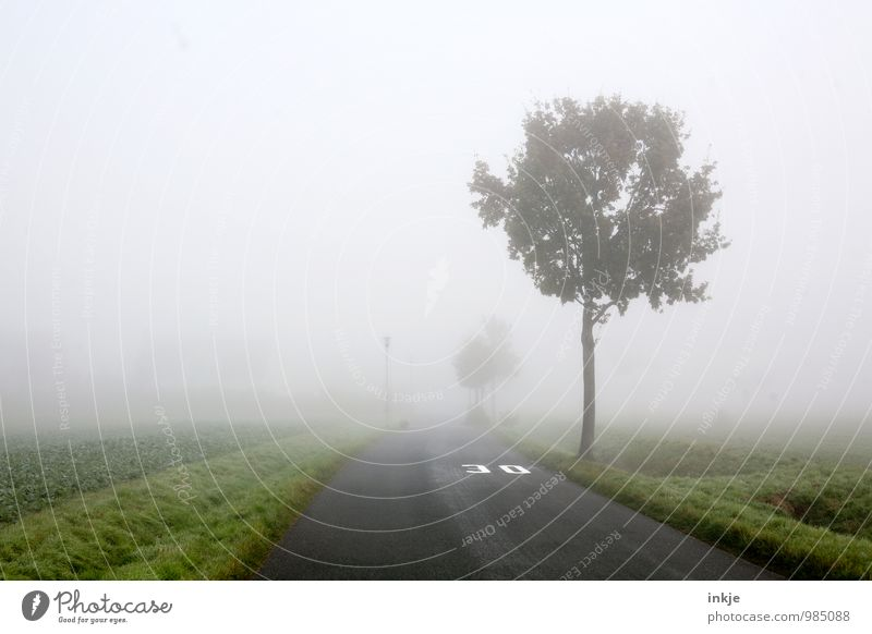 Zone 30 Environment Landscape Air Autumn Winter Bad weather Fog Tree Margin of a field Outskirts Small Town Deserted Transport Traffic infrastructure