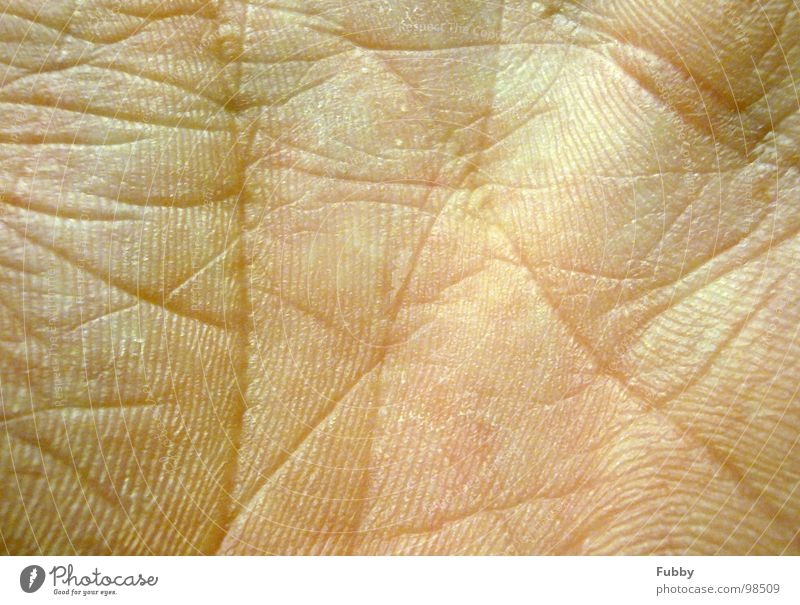 Hand Skin Wrinkles Rachis Parts of body Limbs Skin color