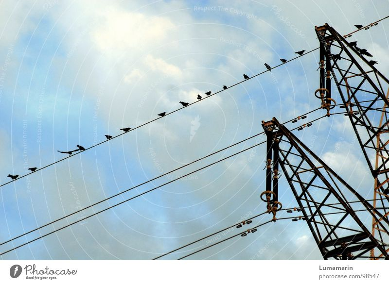 Like clockwork Electricity Electricity pylon Overhead line High-power current Steel Bird Crow Beaded Crouch Success Clouds Black White Industry Cable