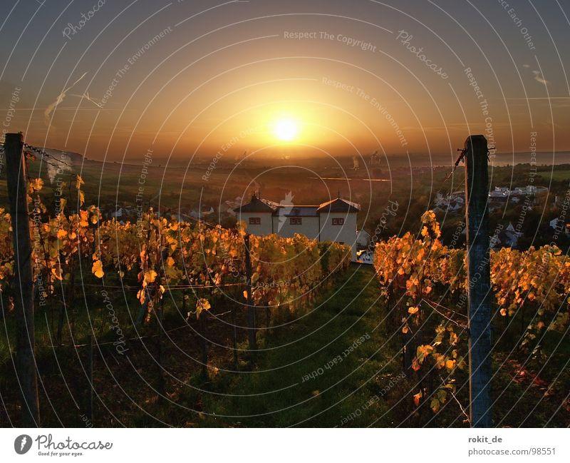 Sun Leaf Cold Autumn Rhineland-Palatinate Moody Fog Gold Sunrise Hesse Vine Smoke Cute Rhine Wake up Alert