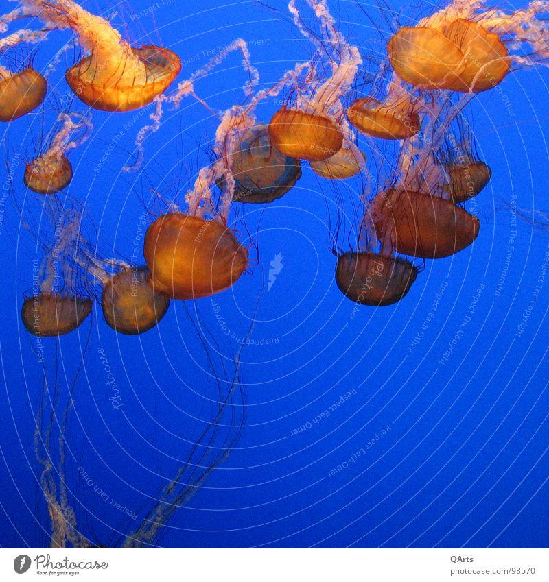 Water Ocean Blue Fish Aquarium Jellyfish Monterey Bay Aquarium