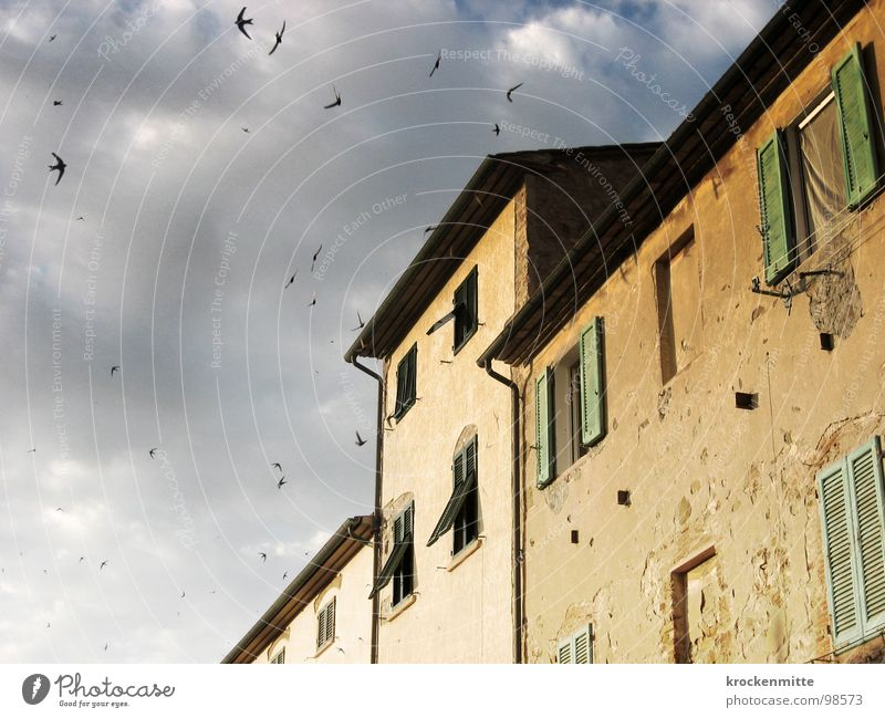 A house in Tuscany Clouds Bird House (Residential Structure) Building Italy Vacation & Travel Window Shutter Bad weather Passion Facade Gale Green Sky Suvereto