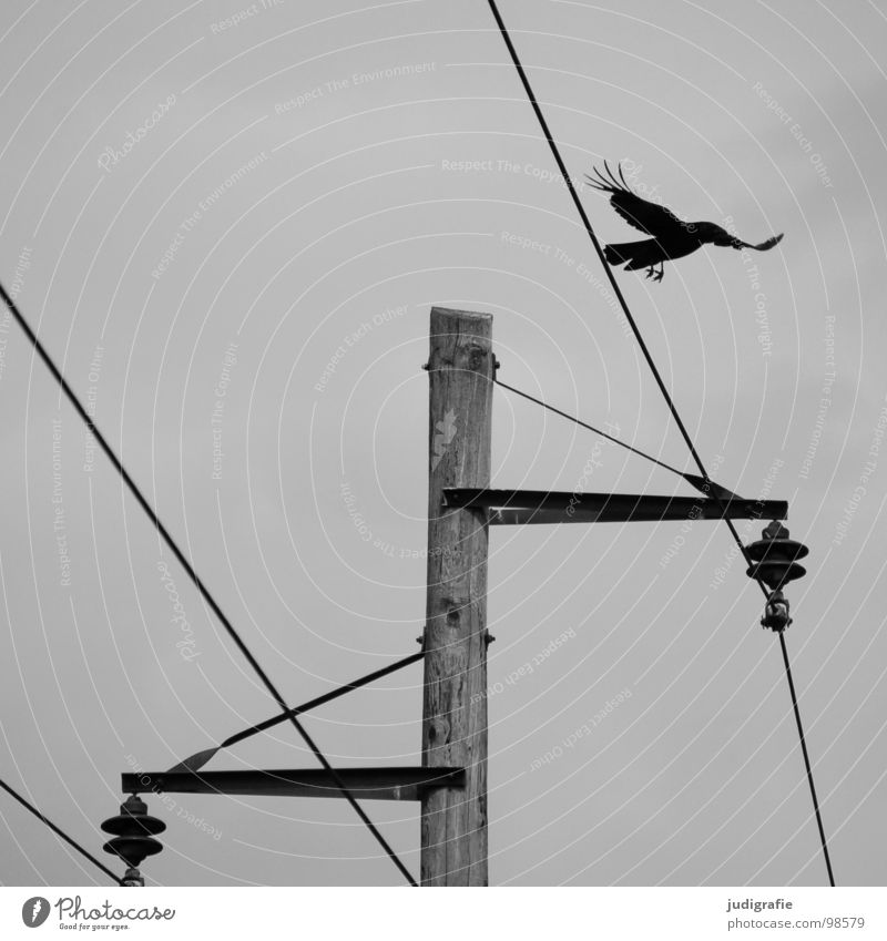 Nature White Black Wood Gray Line Bird Energy industry Electricity Gloomy Technology Cable Electricity pylon Transmission lines Wood grain Provision