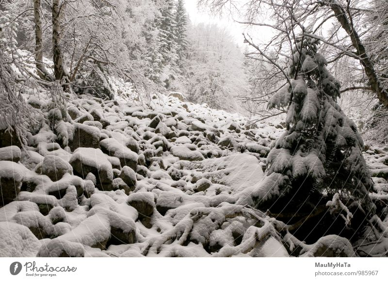 Stone in forest Nature Tree Landscape Winter Forest Life Snow Time Power Contentment Tourism Energy Photography Adventure Frozen Contact