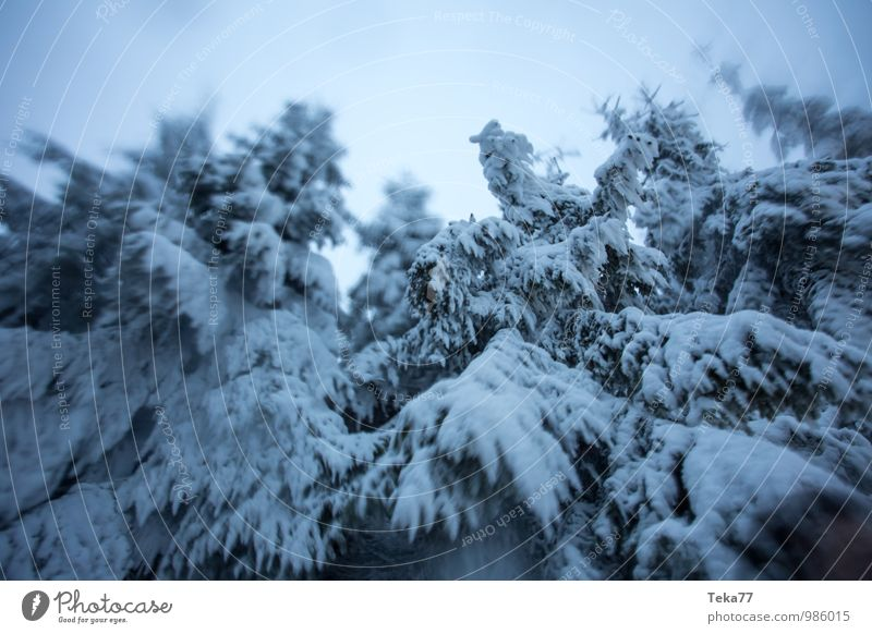 fir snow wind Vacation & Travel Winter Environment Nature Ice Frost Hail Snow Snowfall Plant Tree Adventure Colour photo Subdued colour Exterior shot Deserted