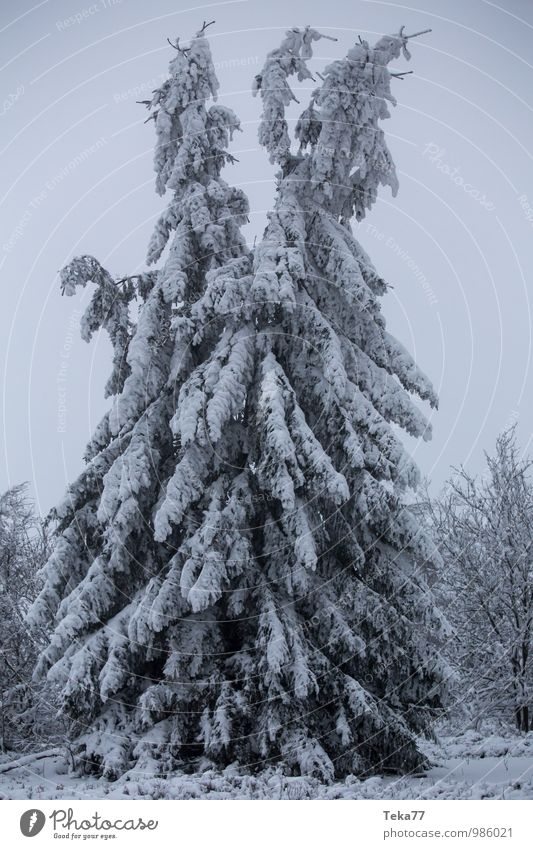 Nature Vacation & Travel Tree Landscape Winter Environment Adventure