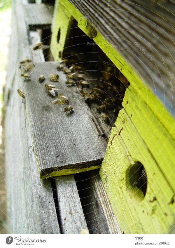 bee flight Bee Honey Beehive Transport Aviation