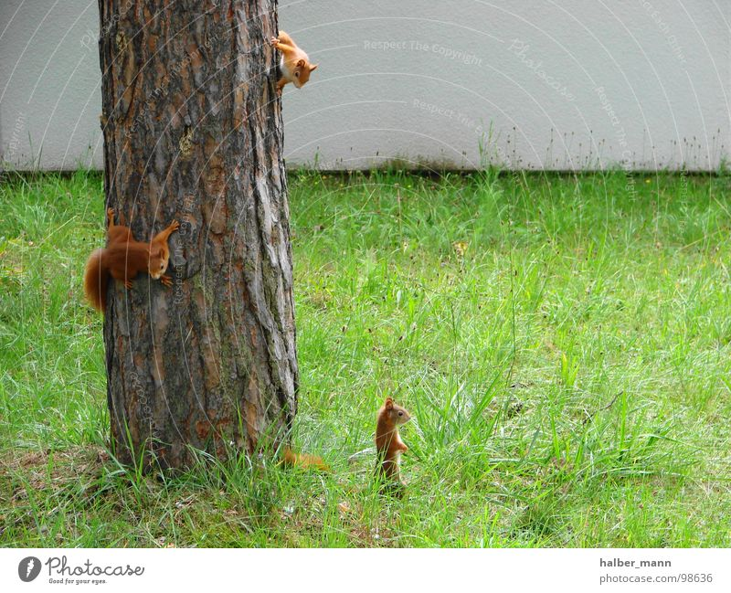 Tree Green Loneliness Animal Fear Search 3 Sweet Lawn Infancy Concentrate Panic Nerviness Squirrel Auburn