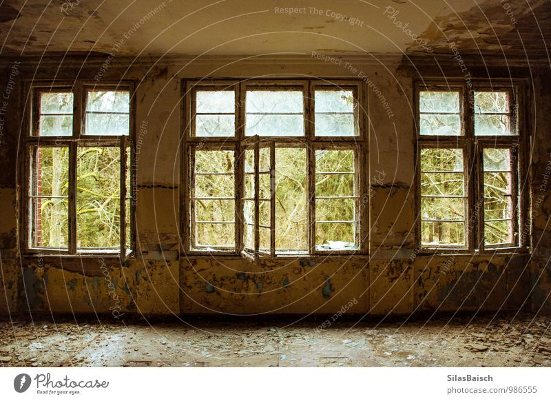 windows Nature Tree Forest House (Residential Structure) Detached house Wall (barrier) Wall (building) Facade Window Door Old Hideous Historic Curiosity