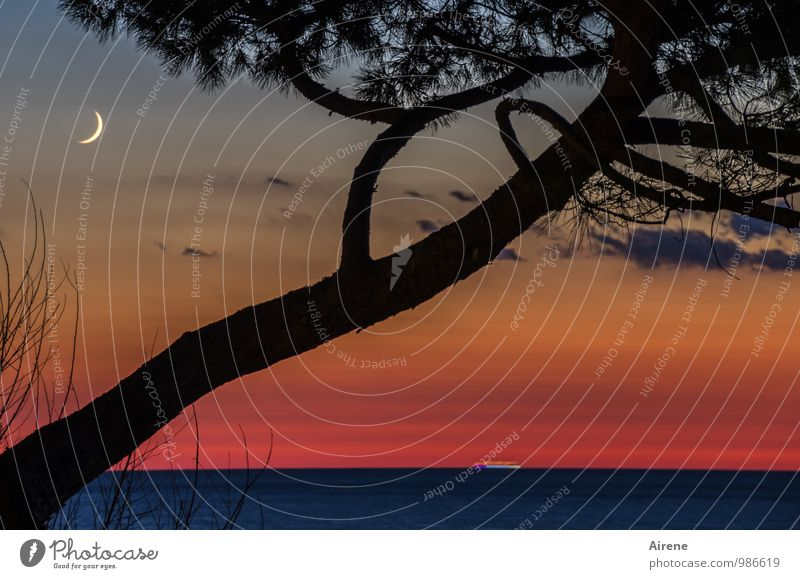 Times of the waxing moon Nature Landscape Elements Water Sky Clouds Night sky Moon Tree Stone pine Coniferous trees Ocean Gold Red Black Romance Idyll
