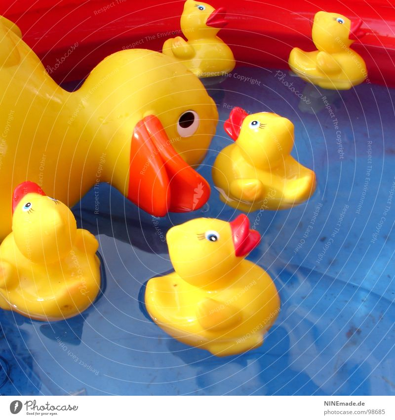 Duck good, all good. Yellow Red Black White Plastic Playing Assembly Swimming pool Duck family Square Karlsruhe Clean Leisure and hobbies Decoration Bird