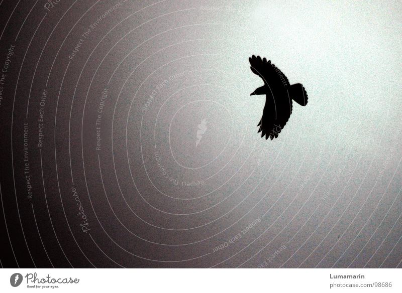 Sky White Sun Animal Black Dark Death Gray Sadness Bird Flying Dangerous Aviation Electricity Feather Wing