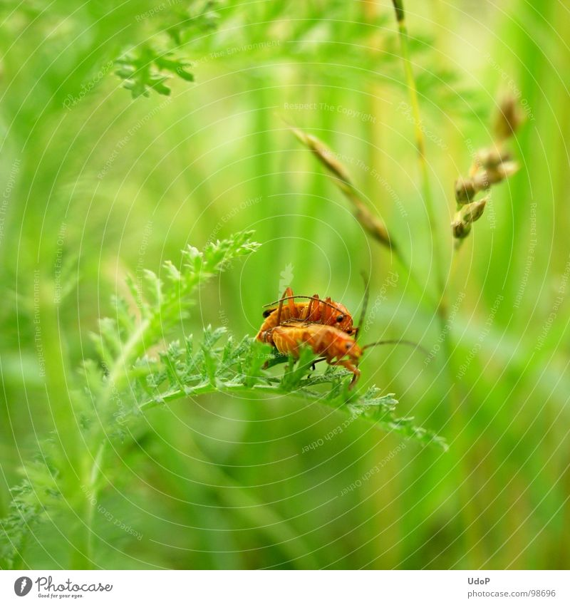 Nature Green White Red Summer Yellow Meadow Movement Blossom Orange 2 Depth of field Beetle