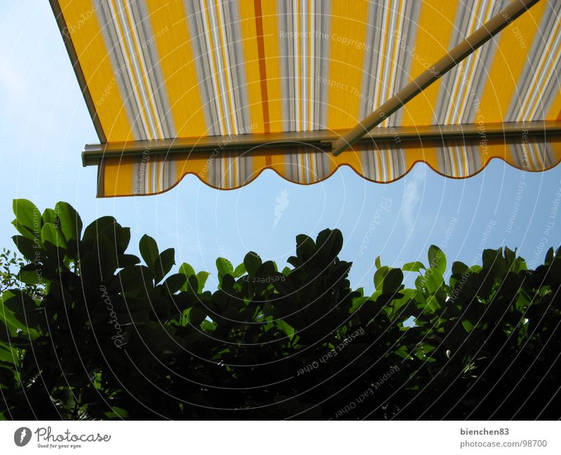 Summer awning01 Sun blind Hedge Yellow Stripe Terrace Balcony Vacation & Travel Garden Park Weather protection Beautiful weather Protection
