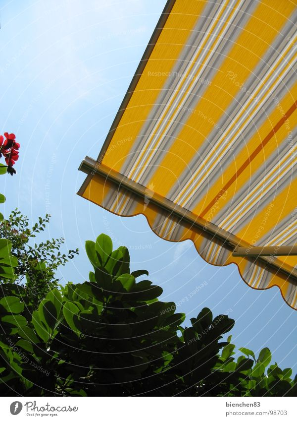Summer awning02 Sun blind Hedge Yellow Stripe Terrace Balcony Vacation & Travel Garden Park Weather protection Beautiful weather Protection
