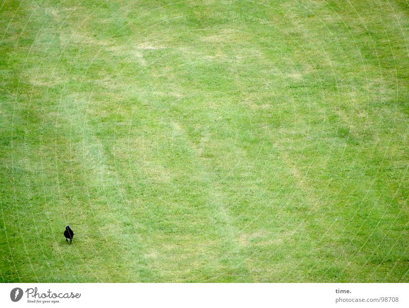Green Loneliness Meadow Bird Search Lawn To go for a walk Boredom Blade of grass To feed Deployment Jackdaw Advance party