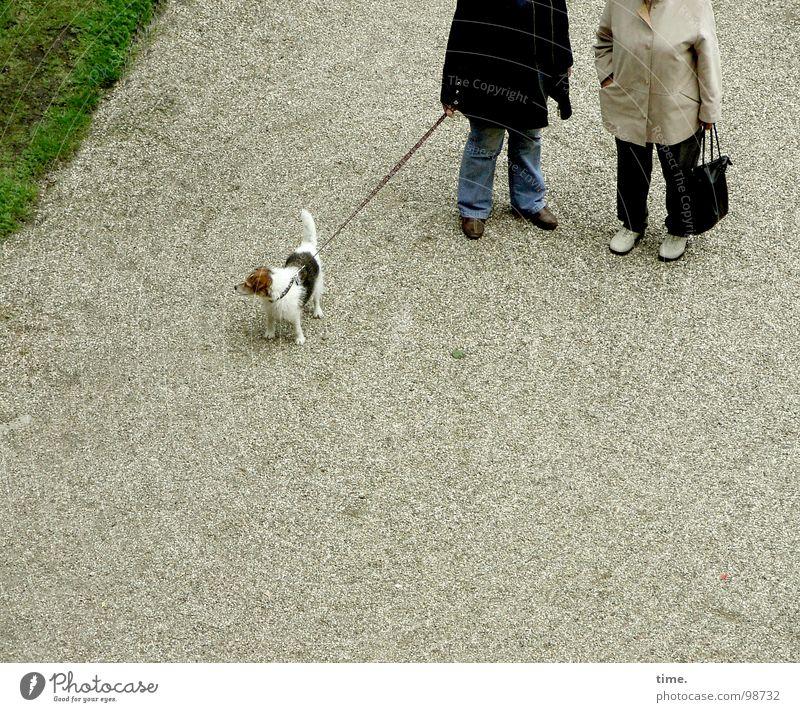 Woman To talk Meadow Dog Adults Rope Education Jacket Boredom Gravel Handbag Gossip Walk the dog