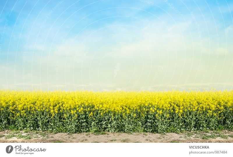 flowering rape field and blue sky Design Nature Landscape Plant Sky Horizon Spring Summer Beautiful weather Meadow Field Canola Canola field