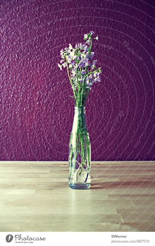deco Lifestyle Style Living or residing Flat (apartment) Decoration Plant Flower Wall (barrier) Wall (building) Bouquet Blossoming Illuminate Friendliness Fresh
