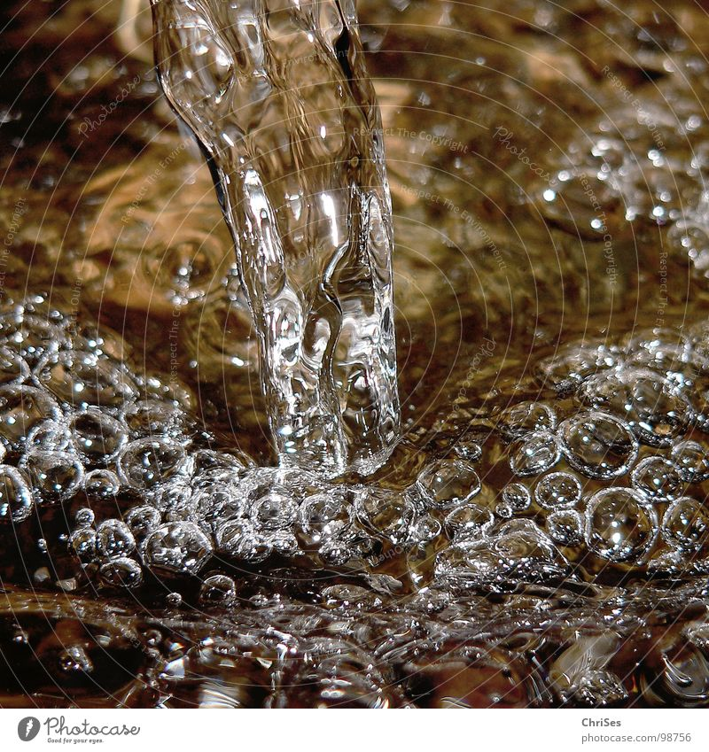 Source of refreshment Air bubble Clarity Cold Wet Flow Bubbling Damp Northern Forest Macro (Extreme close-up) Close-up River Brook Water Blow Thirst near