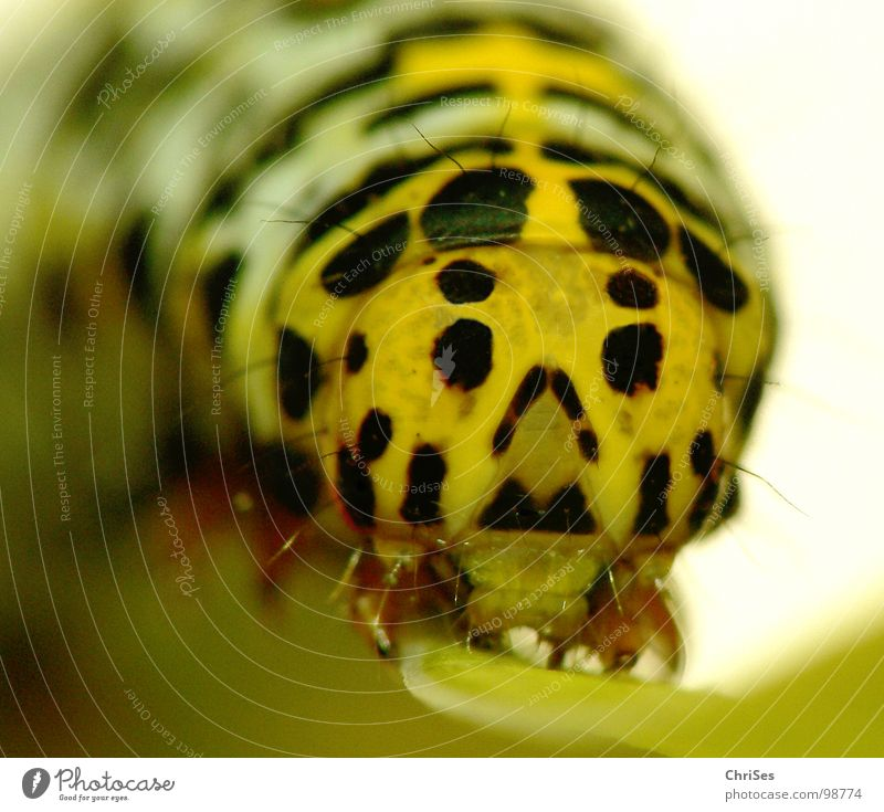 Animal Black Eyes Yellow Insect Butterfly Doll Crawl Caterpillar Northern Forest