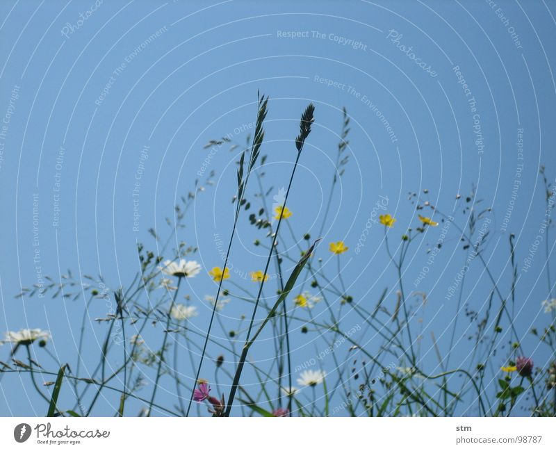 Sky Flower Blue Playing Blossom Grass Mountain Hiking Break Alps Mountaineering Alpine pasture Mountain meadow Medicinal plant