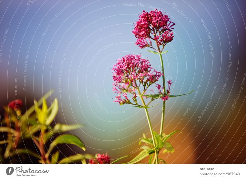 Sky Nature Vacation & Travel Blue Plant Green Summer Relaxation Leaf Calm Blossom Garden Brown Pink Dream Growth