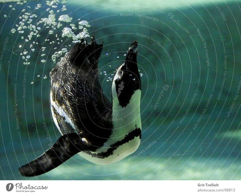 Water Green Bird Zoo Blow Bubble Penguin Animal