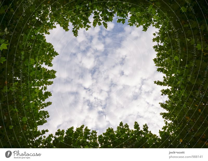 towered up to the sky Horticulture Clouds Summer tree Leaf canopy Kreuzberg Frame Free space Square Dream Simple Tall Sustainability natural green White