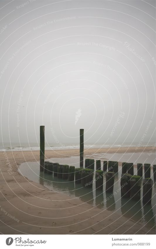 protrude Environment Landscape Horizon Autumn Bad weather Beach North Sea Break water Old Cold Wet Gloomy Gray Moody Sadness Loneliness Vacation & Travel
