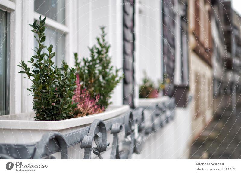 plants Plant Pot plant Village House (Residential Structure) Window Growth Living or residing Historic Calm Colour photo Multicoloured Exterior shot