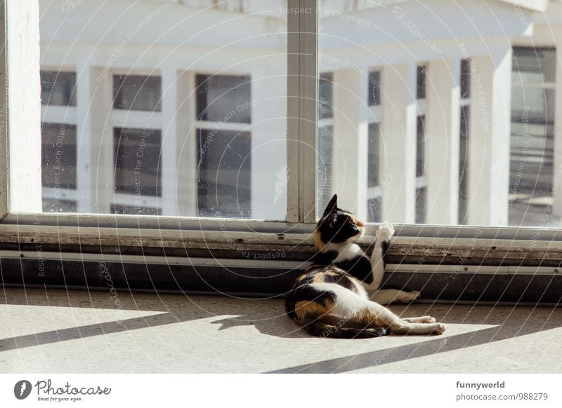 out there... Animal Pet Cat 1 Longing Wanderlust Homesickness To hold on Looking Observe Speckled Lie Captured Sunbathing Sadness Colour photo Exterior shot