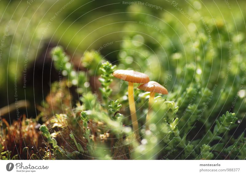 mushrooms Environment Nature Plant Earth Sunlight Grass Moss Foliage plant Wild plant Mushroom Thin Authentic Simple Fresh Uniqueness Small Near Natural Round