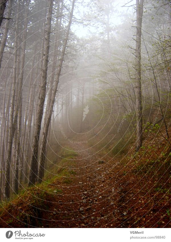 Tree Forest Autumn Lanes & trails Moody Fog Bushes To go for a walk Floor covering Peace Fantastic Mysterious Footpath Mystic Fairy tale