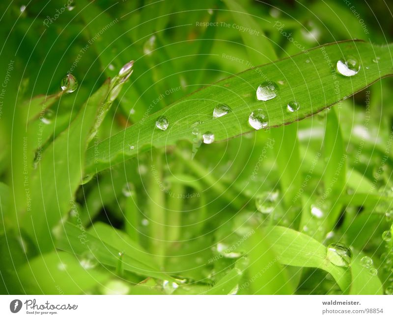 After the rain Grass Meadow Green Water Drops of water Dew Rain Glittering Macro (Extreme close-up) Fresh