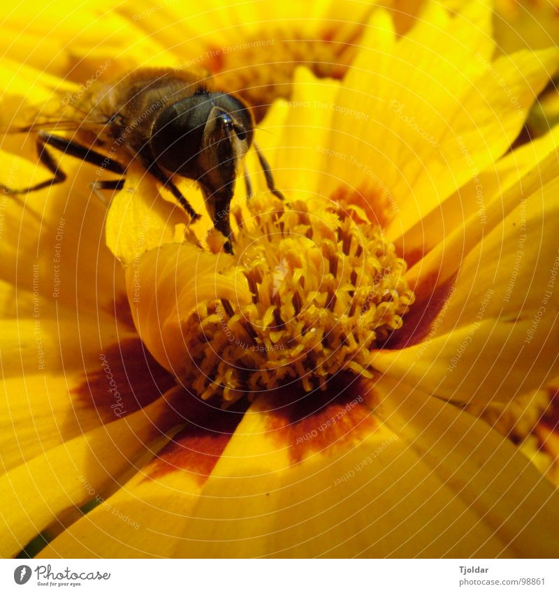 Nature Flower Plant Summer Yellow Blossom Brown Orange Sweet Insect Bee Delicious Pollen Honey Stamen Trunk